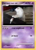 chat buzz sur