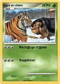 tigre et chien