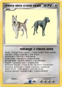 chiens sims