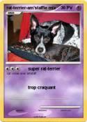 rat-terrier-am'staffie