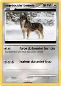 loup-bouvier