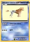 dalmatien-caniche