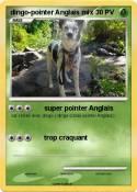 dingo-pointer