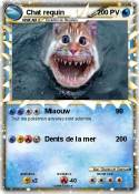 Chat requin