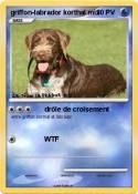 griffon-labrador