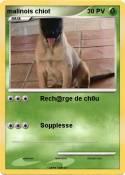 malinois chiot