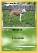 greyhound-pit-bull