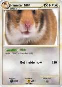 Hamster 1001