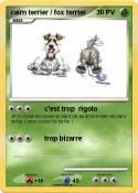 cairn terrier /