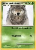 berger malinois