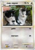chats mignon