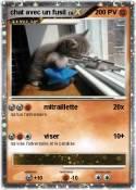 chat avec un