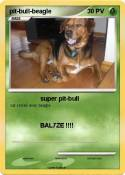 pit-bull-beagle