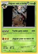 Jaguar eats a