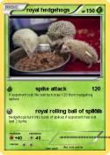 royal hedgehogs