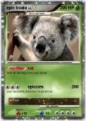 epic koala