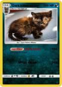 Dark kitten