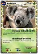koala fatal