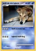 wolf-lab mix