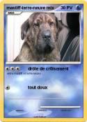 mastiff-terre-neuve