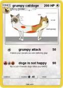 grumpy cat/doge