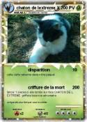 chaton de