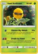 Hawt Sunflower