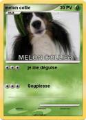 mélon collie