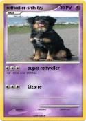 rottweiler-shih-tzu