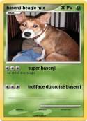 basenji-beagle