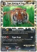 Tiger Staring