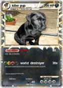 killer pup