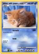 kitten with