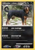 rottweiler (