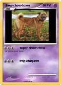 chow-chow-boxer