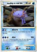 mudkip in real