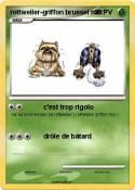 rottweiler-griffon