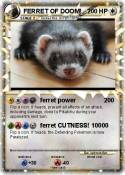 FERRET OF DOOM!
