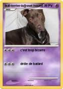 bull-terrier-b@sset
