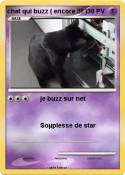 chat qui buzz (
