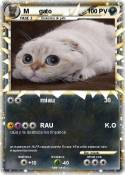 M gato