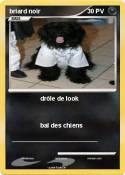 briard noir