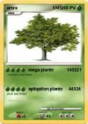 arbre 1145