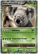 Koala MANGEUR