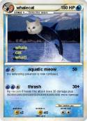 whalecat