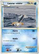 Calamar volador