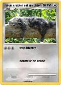 raton crabier