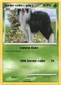 border collie (