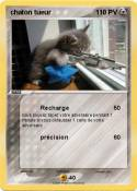 chaton tueur
