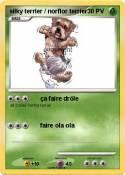 silky terrier /